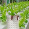 育苗海绵块蔬菜种植  圆孔 方形窝孔无土栽培育苗水培定植海绵